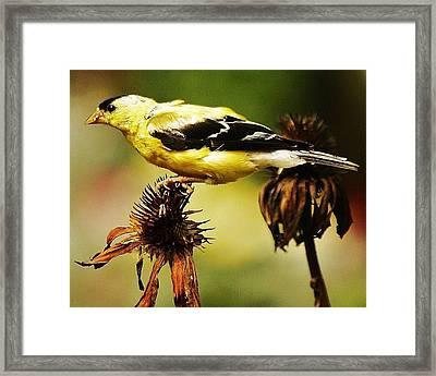 Framed Print featuring the photograph Seeds For Me... by Al Fritz