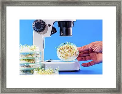 Seeds In Petri Dish Framed Print by Wladimir Bulgar