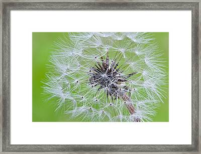 Seeds Of Life Framed Print