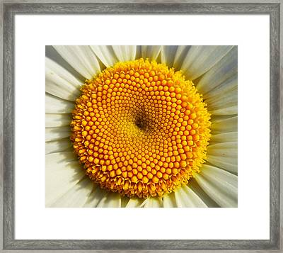 Seeds Of Love Framed Print by Karen Horn