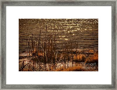 Seegrass Riple Framed Print by Angelika Drake