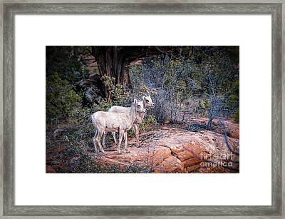 Seeing Double Framed Print by Bob and Nancy Kendrick