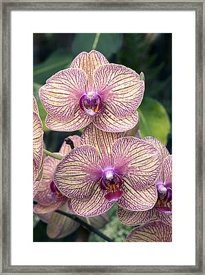 Seeing Double Framed Print by James Steele