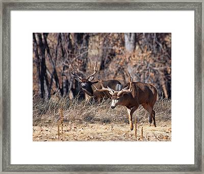 Framed Print featuring the photograph Seeing Double by Jim Garrison