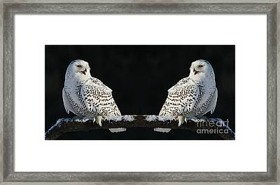 Seeing Double- Snowy Owl At Twilight Framed Print by Inspired Nature Photography Fine Art Photography