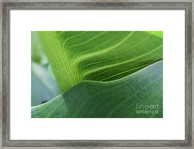 Seeing Green Framed Print
