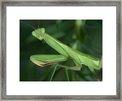 Seeing Green Framed Print by Shane Bechler