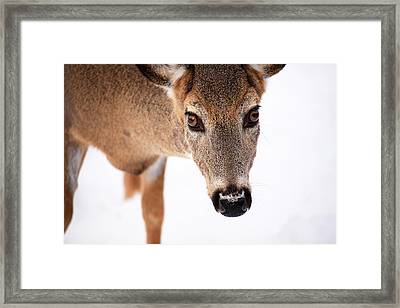 Seeing Into The Eyes Framed Print by Karol Livote