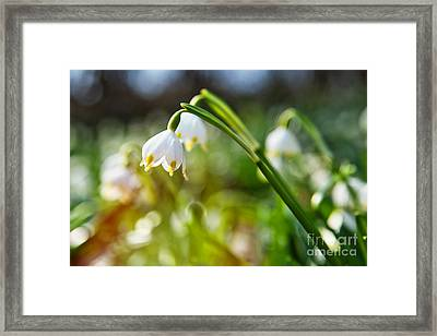 Framed Print featuring the photograph Seeing The Sun by Christine Sponchia