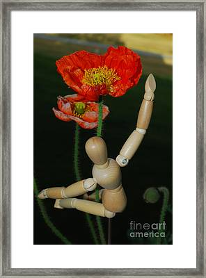 Seeking A Yellow Brick Road Number One Poppy  Framed Print by Heather Kirk