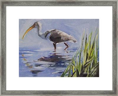 Seeking Fish Framed Print by Mary Hubley
