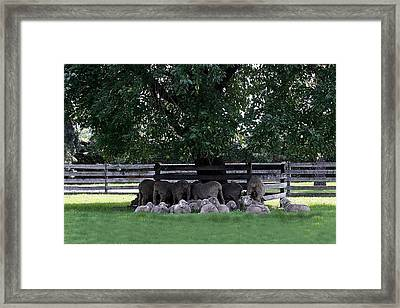 Framed Print featuring the photograph Seeking Shade by Ellen O'Reilly