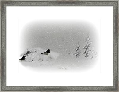 Seeking Shelter Framed Print