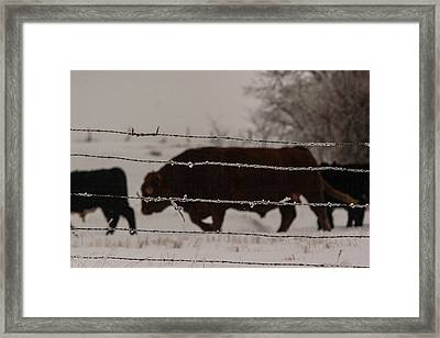 Seeking Shelter From The Cold Framed Print