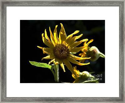 Seeking Sun Framed Print by Skip Willits