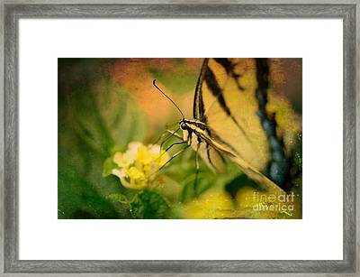 Seeking Sweetness 1 Framed Print