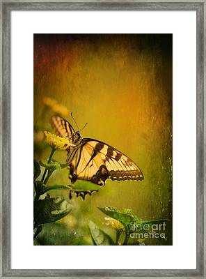 Seeking Sweetness 2 Framed Print