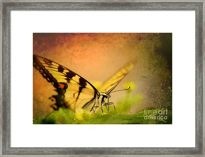 Seeking Sweetness 3 Framed Print