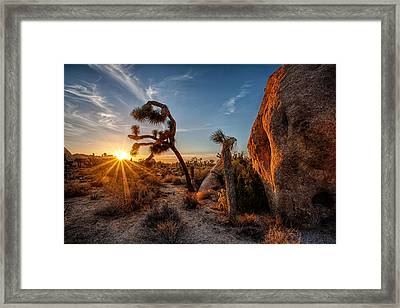 Seeking The Light Framed Print by Peter Tellone