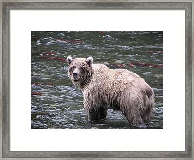 Seen Any Fish Framed Print by Zane Giles