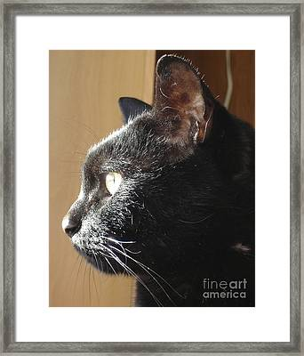 Framed Print featuring the photograph Seesa by Kerri Mortenson