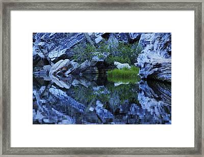 Sekani Wild Framed Print