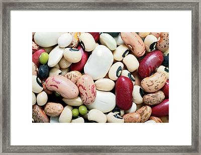 Selection Of Beans Framed Print by Victor De Schwanberg
