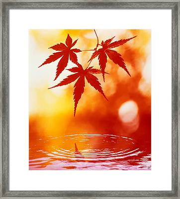 Selective Focus Of Red Leaves Framed Print by Panoramic Images