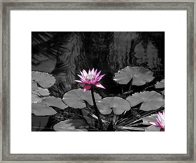 Selective Lily Framed Print