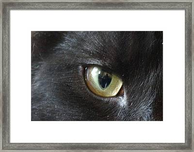 Self Portrait Framed Print by Keith Nichols