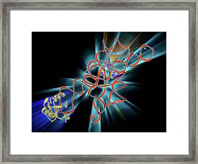 Self-splicing Rna Intron Framed Print by Laguna Design