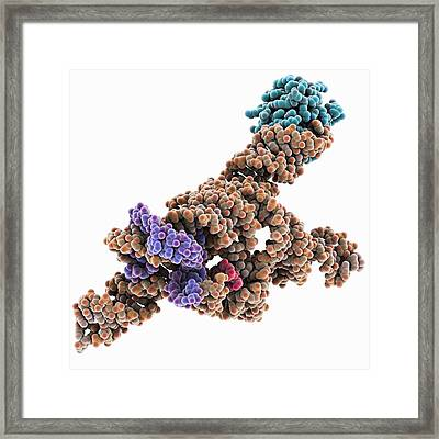 Self-splicing Rna Intron, Molecular Framed Print by Science Photo Library
