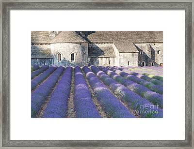 Senanque Abbey And Lavender Field - Provence France Framed Print