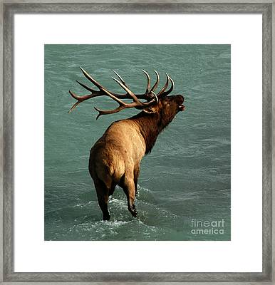Framed Print featuring the photograph Sending A Challenge by Vivian Christopher
