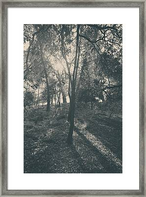 Sending Light And Warmth To You Framed Print by Laurie Search