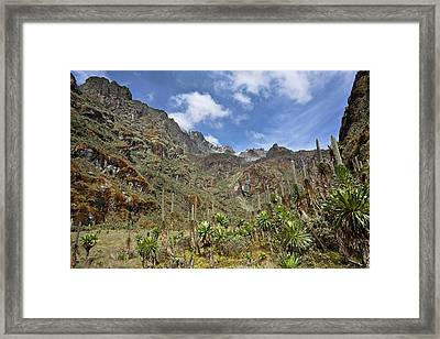 Senecias And Lobelias In The Upper Framed Print by Martin Zwick