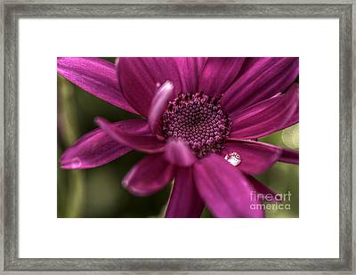 Senetti Water Droplet Framed Print by Andrew Pounder