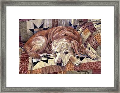 Senior Siesta Framed Print by Debbie Stonebraker