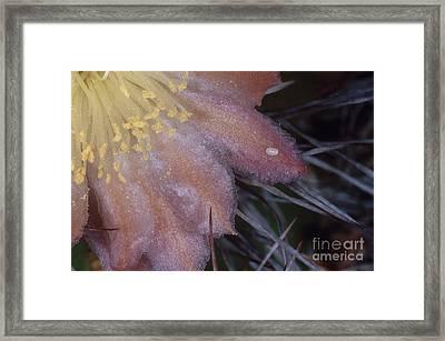 Senita Moth Egg Framed Print by Gregory G. Dimijian, M.D.