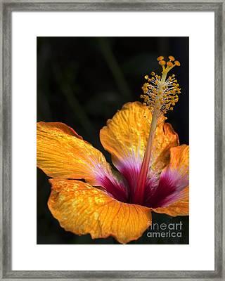 Senorita Framed Print by Elizabeth Chevalier