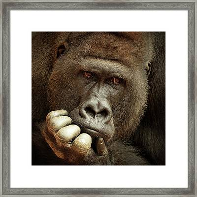 Sense Of Life ... Framed Print