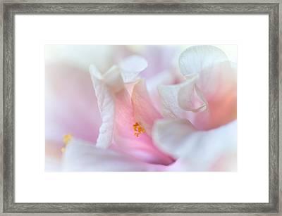 Sensuality. Peach Hibiscus. Macro Framed Print by Jenny Rainbow