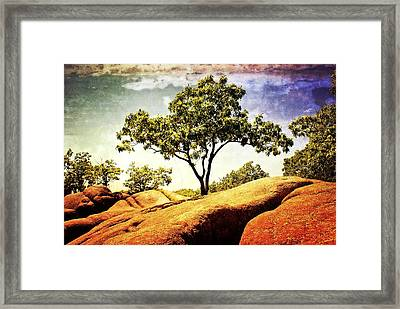 Sentinal Tree Framed Print by Marty Koch