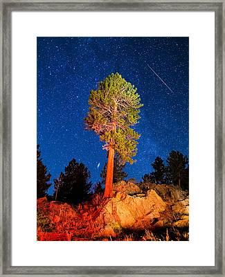 Sentinel Framed Print by Bryce Bradford