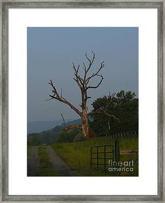 Framed Print featuring the photograph Sentinel by Jane Ford