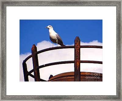 Sentinel Sea Gull Framed Print by Joy Hardee