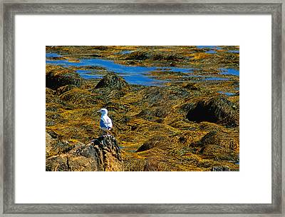 Framed Print featuring the photograph Sentinel Seagull by Nancy De Flon
