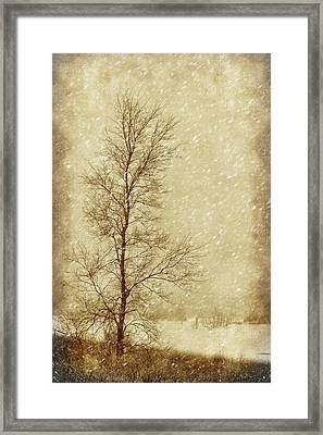 Sentinel Tree In Winter Framed Print by Nikolyn McDonald