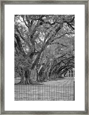 Sentinels Monochrome Framed Print by Steve Harrington