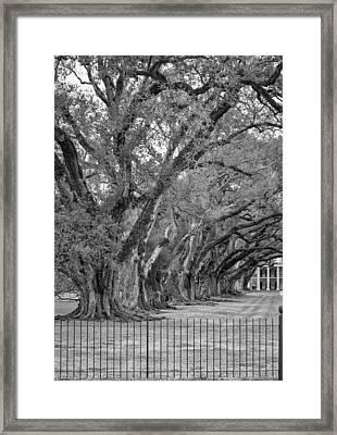 Sentinels Monochrome Framed Print by Steve Harrington